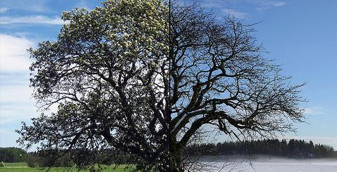 Summer v. Winter - Lånat från Steffe@Flickr